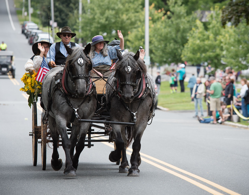 Tub Parade 2018. Karl Riva driving a pair of Brabant blue roan draft horses. Photo by Blue Moon Images: www.bluemoonimages.smugmug.com www.facebook.com/danabluemoonimages