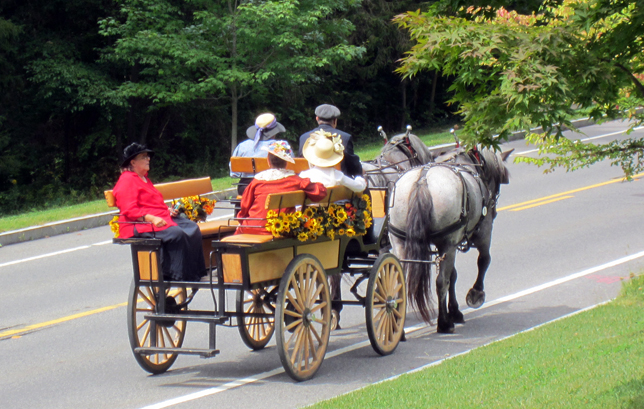 Tub Parade 2015. Karl Riva driving an 8-passenger wagonette pulled by a pair of Baybrant mares. Photo by Tjasa Sprague.