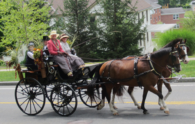 Tub Parade 2015. Adrienne St. Cyr driving a German-made Sport Break put to a pair of Canadian Hackney/Clydesdale crossbreds. Photo by Tjasa Sprague.