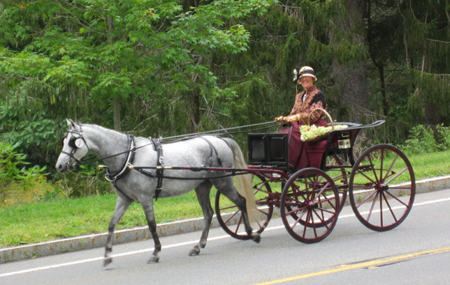 Tub Parade 2015. Ann Willey driving a Brewster Sailor Wagon pulled by a Welsh pony. Photo by Tjasa Sprague.