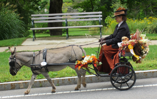 Tub Parade 2015. Carol Terry driving Vito the donkey. Photo by Tjasa Sprague.