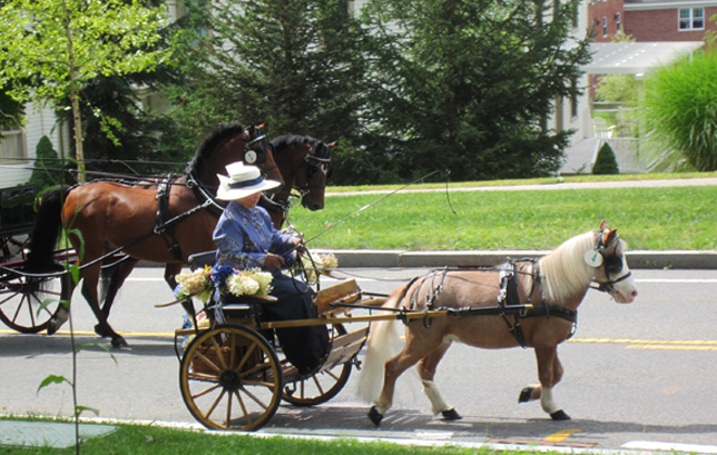 Tub Parade 2015. Diane Bozyczko driving her miniature horse My Dream Stinger's O'Henry. Photo by Tjasa Sprague.