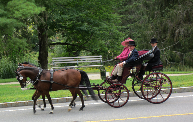 Tub Parade 2015. Mary Stokes Waller driving her pair of Welsh ponies. Photo by Tjasa Sprague.